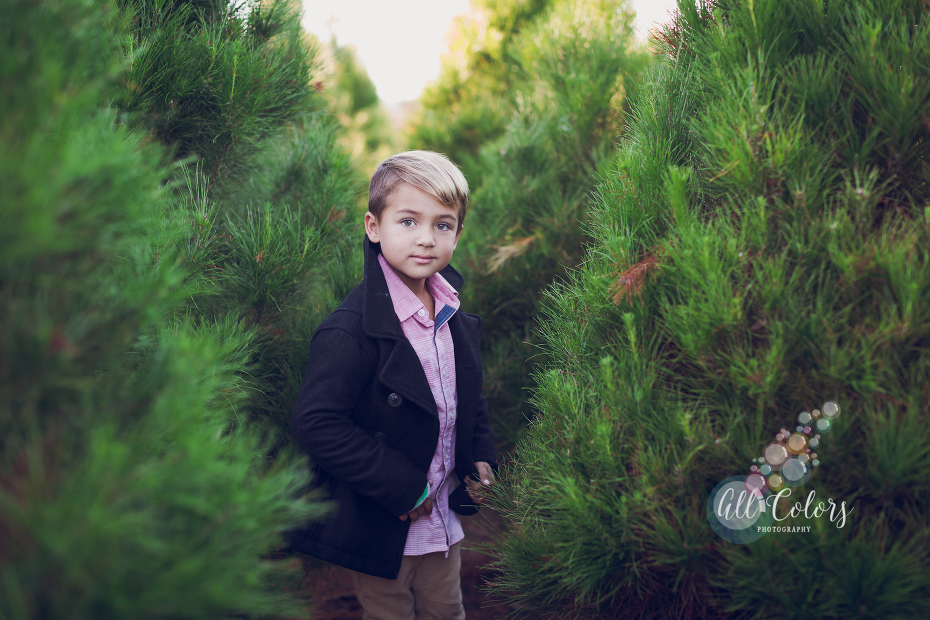 San Diego Photographer. christmas tree farm ideas