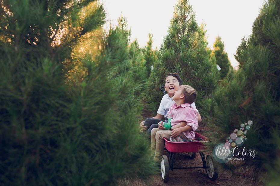 christmas tree farm ideas. San Diego Photographer